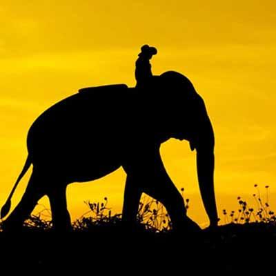 象與騎象人