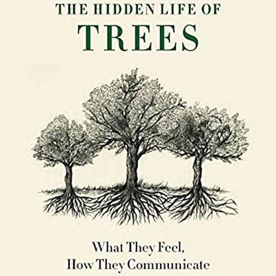 树的秘密生活