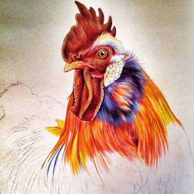 雞征服世界