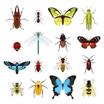 昆虫记(完)