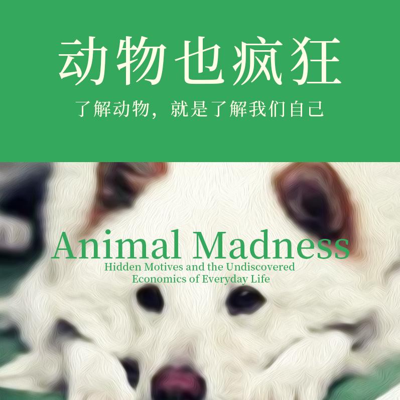 动物也疯狂