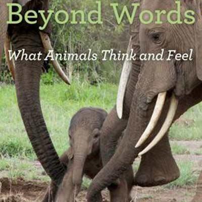 动物在想什么?