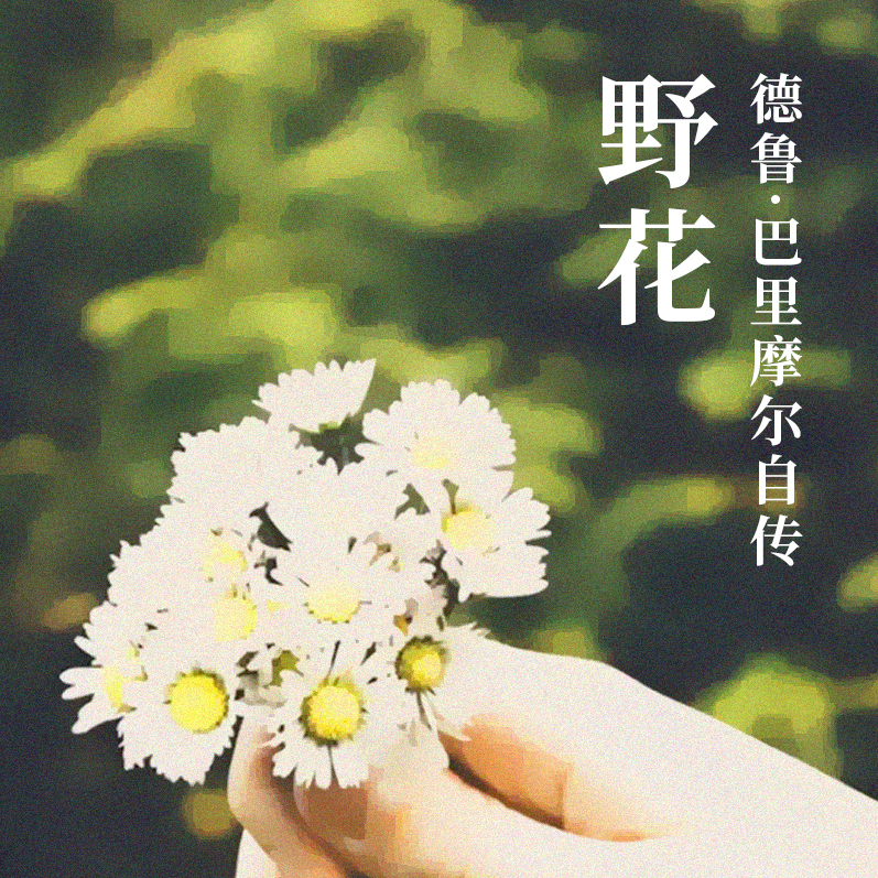 野花:德鲁·巴里摩尔自传