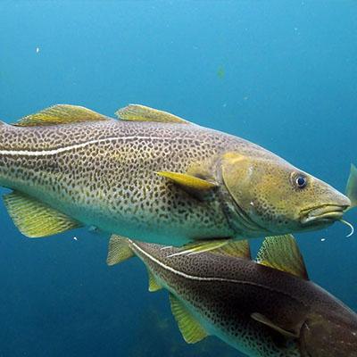 一条改变世界的鱼